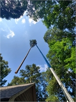 Imperial Tree Removal Service